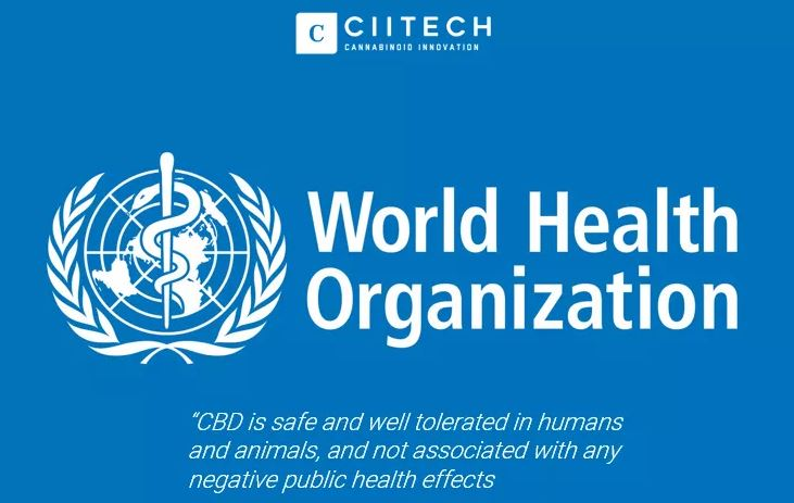 Cbd Hanfol World Health Organization Who