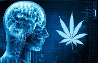 Endocannabidoid System And Everything You Need To Know About It